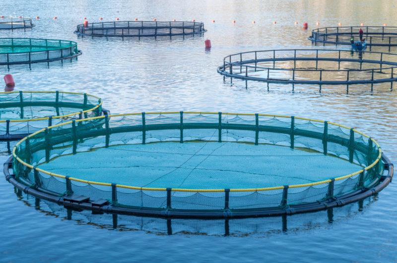 LimCo Iternational Aquakultur